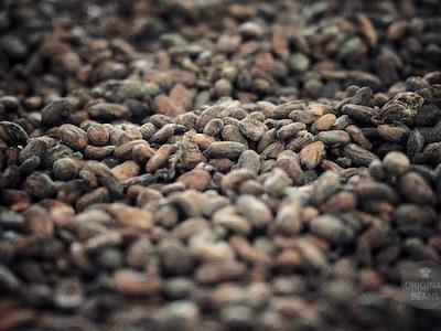 3OBC Kakaobohnen