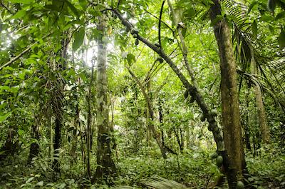 goodmoodfood Wild wachsender Kakao Bolivien