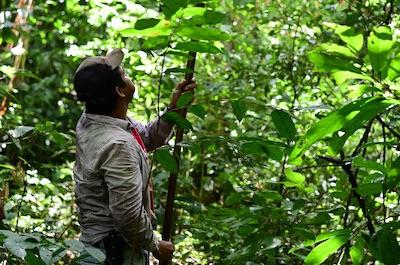 goodmoodfood Wildsammlung Kakao Bolivien